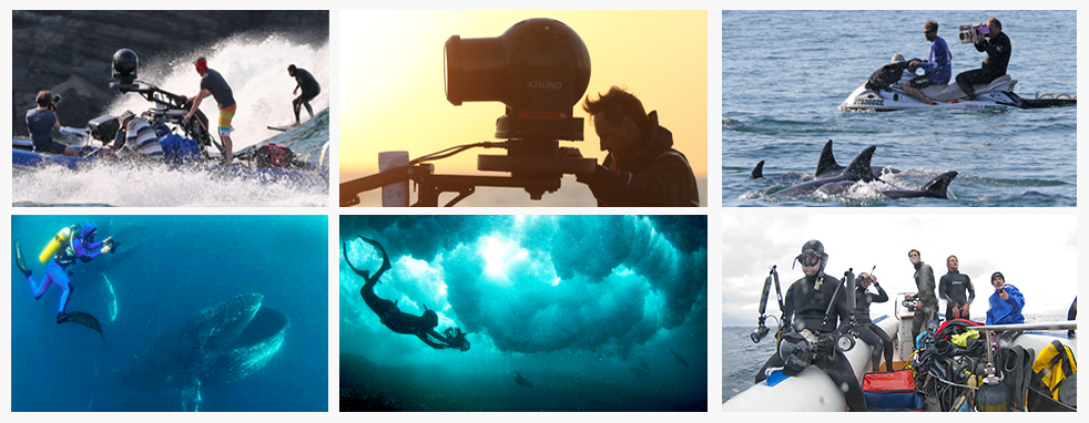 Ocean Film productions done with Animal Ocean, Seal Snorkeling Animal Ocean Cape Town
