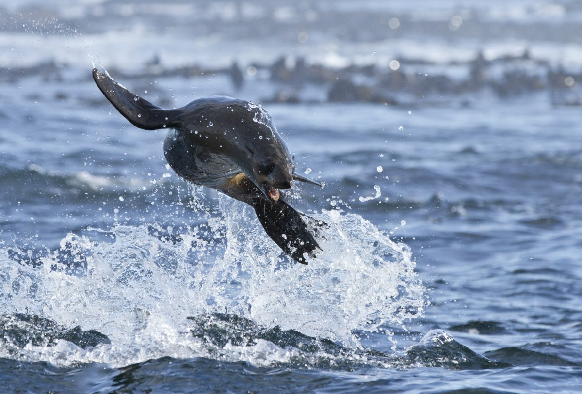 Swim With Seals In Cape Town