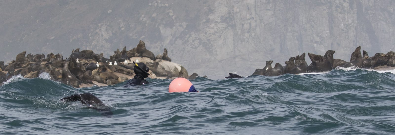 animal Ocean seal snorkeling hout bay cape town