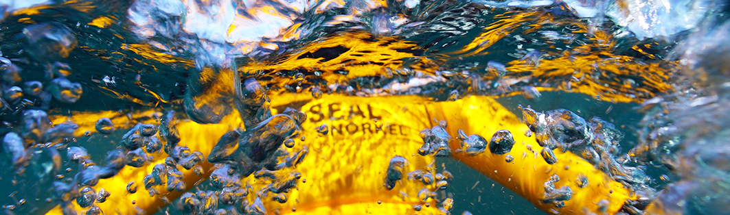 seal snorkeling cape town guide