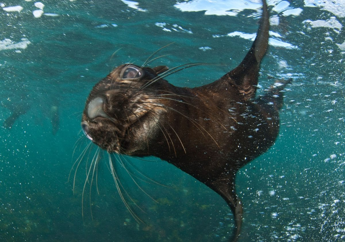Seal Snorkeling | Cape Town