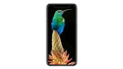 Sunbird wallpapers for your phone - 5 pack