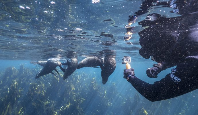 Seal Snorkeling, Cape Town, South Africa, Hout Bay